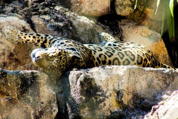 Jacksonville Zoo Photography